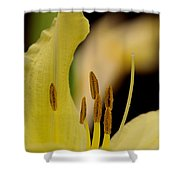 Lily - Flower - Fore And Aft Shower Curtain