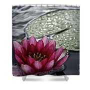 Lily And Pad Shower Curtain