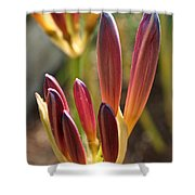 Lily Candles Shower Curtain