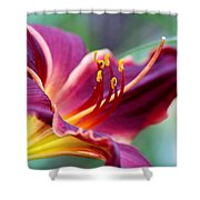 Lily - Hardy Shower Curtain