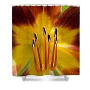 Lily Heart II Shower Curtain