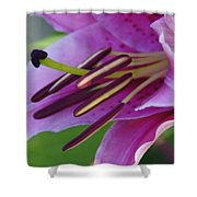 Lily In Full Bloom Shower Curtain