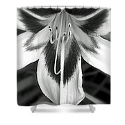 Lily Is An Angel II Shower Curtain