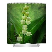Lily Of The Valley - Convallaria Majalis Shower Curtain