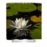 Lily On The Pond Shower Curtain