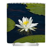 Lily Pad And Flower Shower Curtain