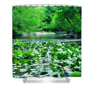 Lily Pads Along Unami Creek Shower Curtain