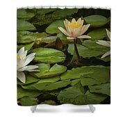 Lily Pads And Blossoms. No186 Shower Curtain