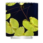 Lily Pads And Lotus Blossom Shower Curtain