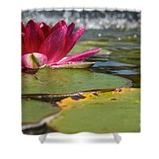 Lily Pads And Petals Shower Curtain