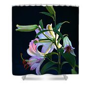 Lily Pod To Flower Shower Curtain