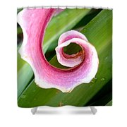 Lily Spiral Shower Curtain