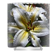 Lily Sweet Lily Shower Curtain