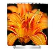 Lily Shower Curtain