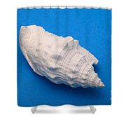Lime Made From A Seashell Shower Curtain by Ted Kinsman