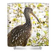 Limpkin Luster Shower Curtain