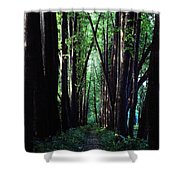 Linden Trees Line Leo Tolstoys Favorite Shower Curtain
