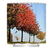 Line Of Autumn Trees Shower Curtain