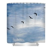 Linear Flock Of Pelicans Shower Curtain