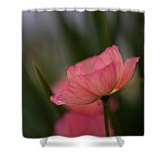 Lines Of Floral  Shower Curtain