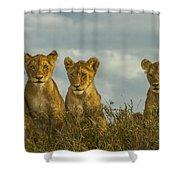 Lion Cubs Serengeti National Park Shower Curtain