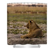 Lion Lazy Shower Curtain