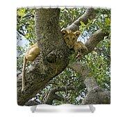 Lion Lookout Shower Curtain