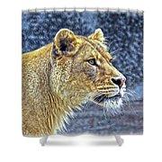 Lion Stare Shower Curtain