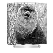 Lion Tailed Macaque Shower Curtain