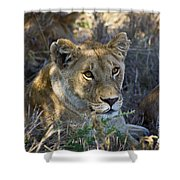 Lioness With Pride In Shade Shower Curtain