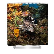 Lionfish, Fiji Shower Curtain