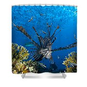 Lionfish Foraging Amongst Corals Shower Curtain