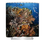 Lionfish, Indonesia Shower Curtain