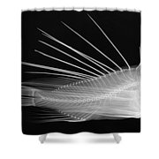 Lionfish X-ray Shower Curtain