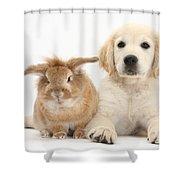 Lionhead-cross Rabbit And Golden Shower Curtain