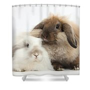 Lionhead-lop Rabbits Shower Curtain