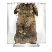 Lionhead Rabbit Shower Curtain