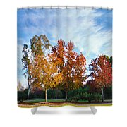 Liquid Amber Trees Shower Curtain