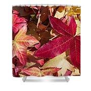 Liquidambar Autumn Shower Curtain