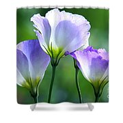 Lisianthus Number 5 Shower Curtain