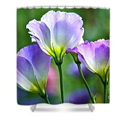 Lisianthus Number 6 Shower Curtain