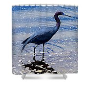 Lit'l Blue Shower Curtain
