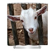 Little Billy Shower Curtain