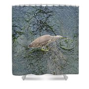 Little Bittern Shower Curtain