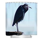 Little Blue Heron I Shower Curtain