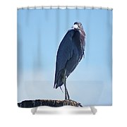 Little Blue Heron II Shower Curtain