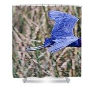 Little Blue Heron In Flight Shower Curtain