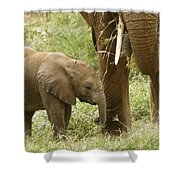 Little Ellie Shower Curtain