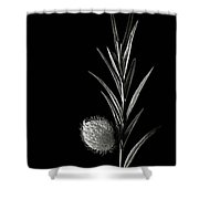 Little Green Balls In Black And White Shower Curtain