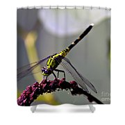 Little Green Wings Three Shower Curtain